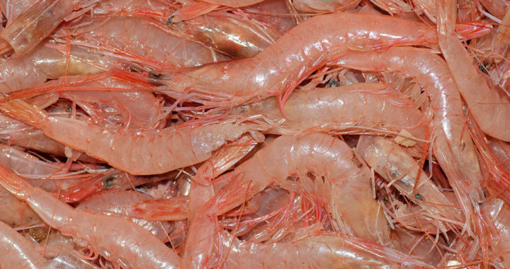 Applications of chitin and chitosan