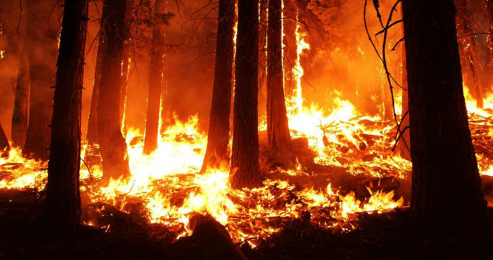 Causes of wildfire