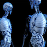 Roles of insulin in the human body